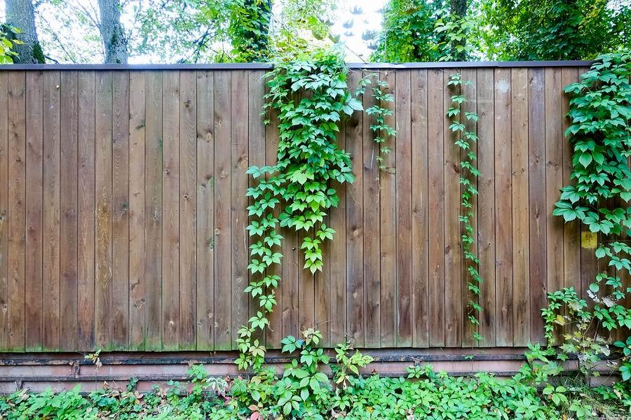 kerítés vagy régi falak befuttatása